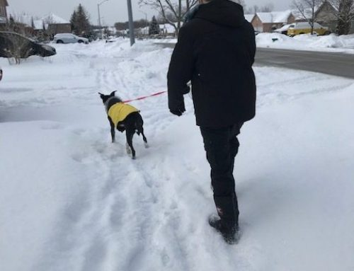 Tips on Walking Your Dog in Winter
