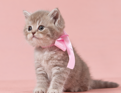 Congratulations on Your New Kitten!