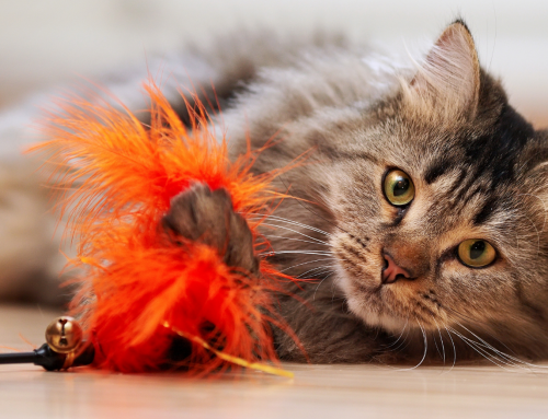 Enrichment and Toys for Cats