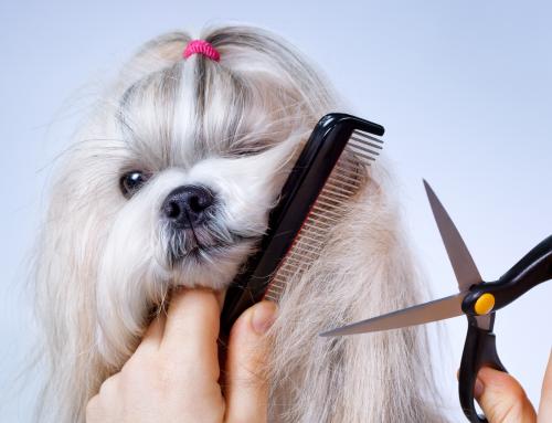 How often should I groom my pet?